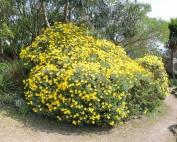 JBM Services Jardinage plante