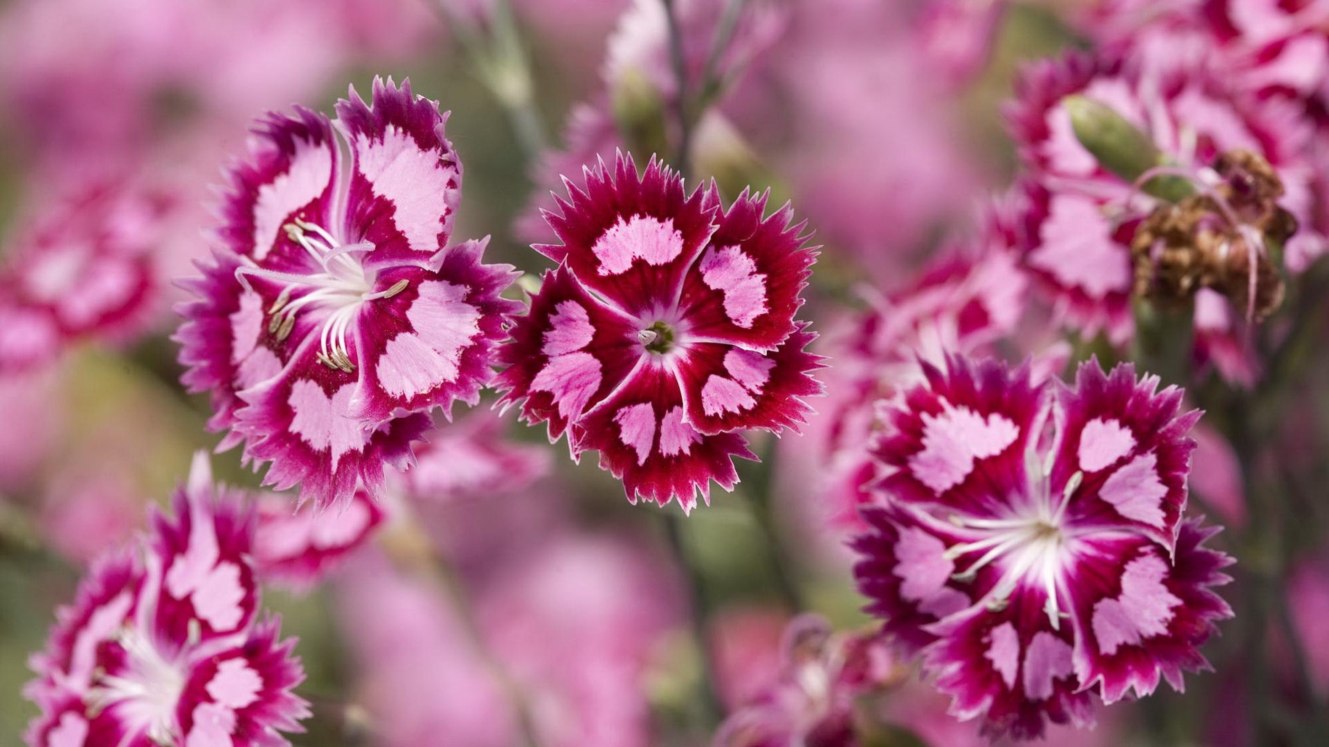 JBM Services: Jardinage, Bricolage , Entretien de Piscines, fleur