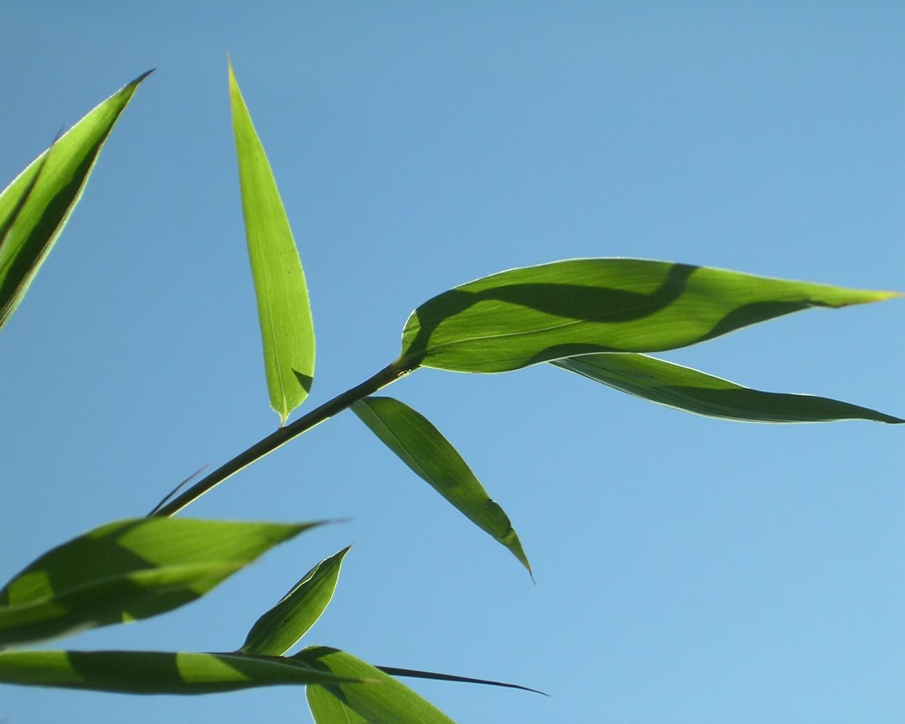 JBM Services: Jardinage, Bricolage , Entretien de Piscines, bambou